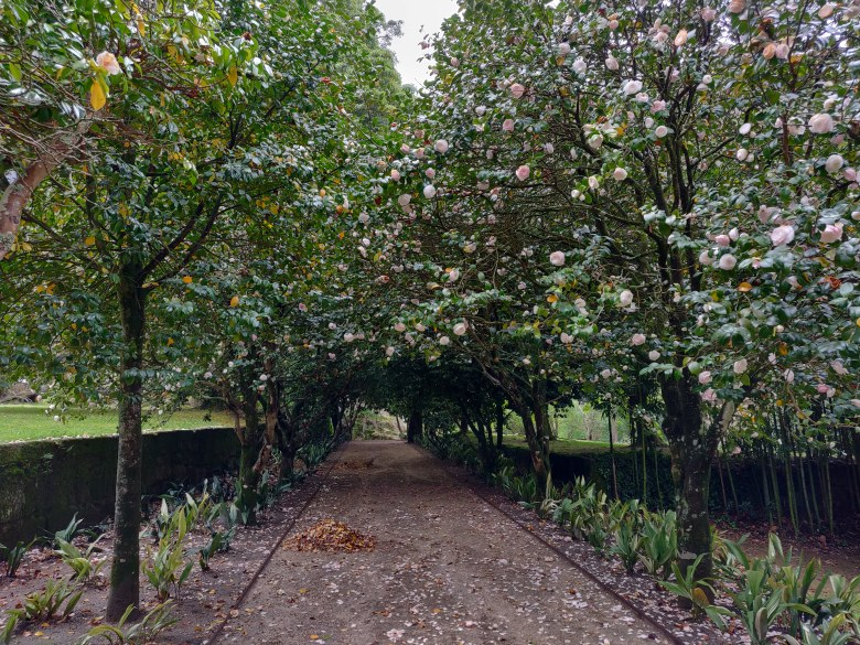 A Camellia lined pathway at the Sensory Garden.